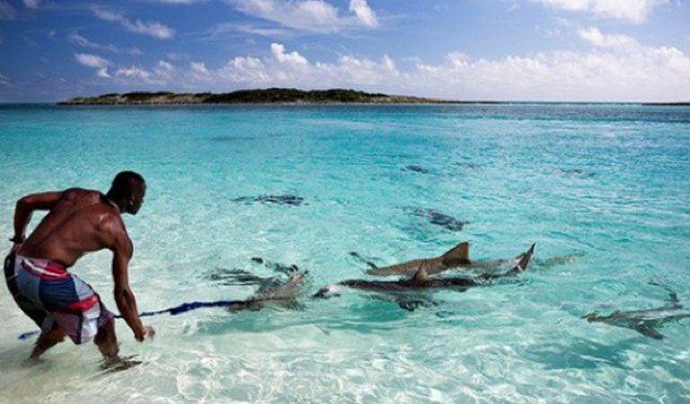 Bahamy zraloci