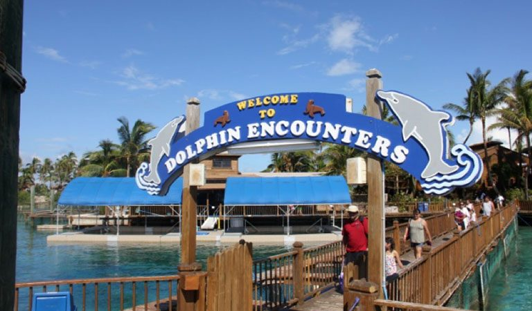 Grand Bahama Island delfinarium