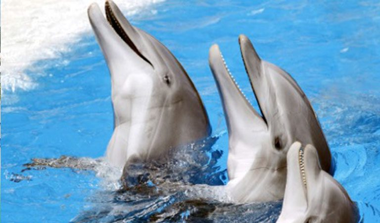Grand Bahama Island delfíni
