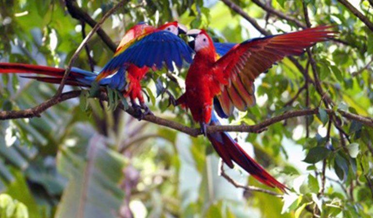 Kostarika den 9 Manuel Antonio papousci