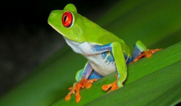 Kostarika den 3 Národní park Tortuguero zaba
