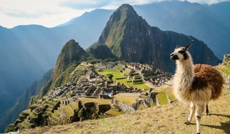 Machu Picchu s lamou
