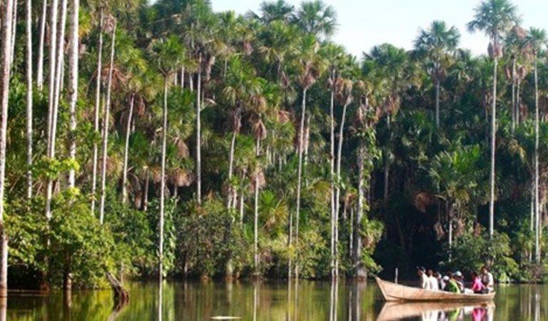 Peru Amazonie destny prales