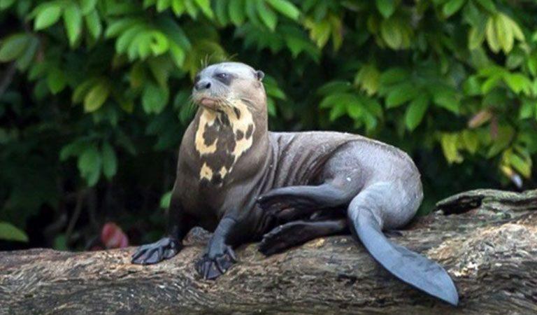 Peru Amazonie fauna