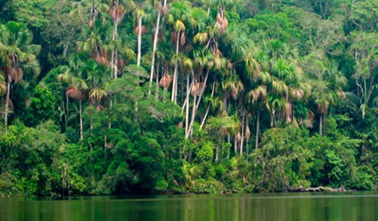 Peru Amazonie flora