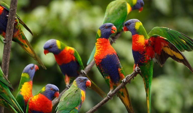 Peru Amazonie papousci