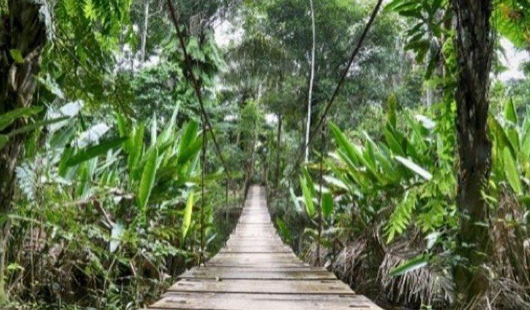 Peru Amazonie prales