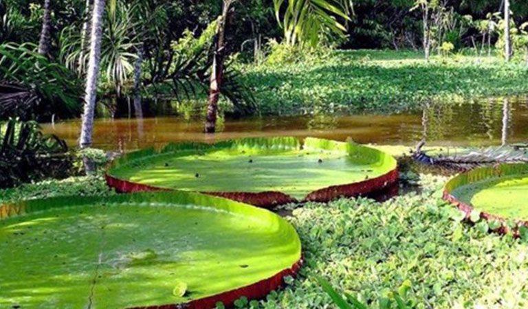 Peru Amazonie prales lekniny