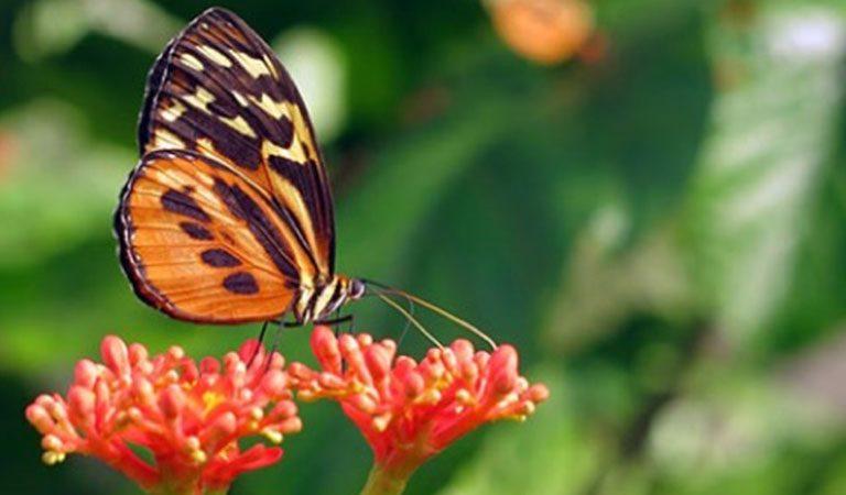 Peru Amazonie prales motyl