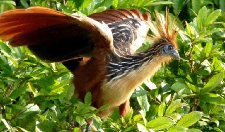 Peru Maldonado pták
