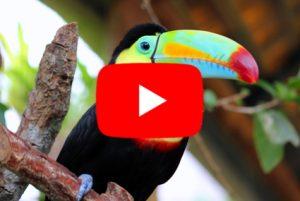 VIDEOPOZVÁNKA na Fascinující KOSTARIKA