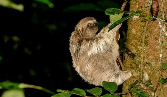 Kostarika Arenal den 6 relax